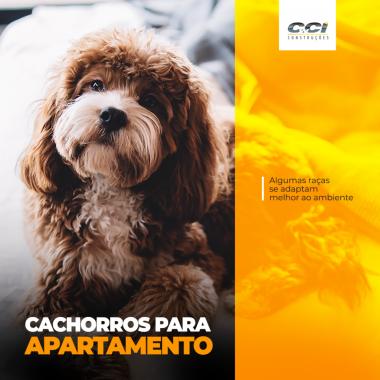 CACHORRO_A